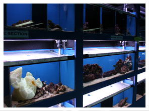 A5 Aquatics Superstore 2