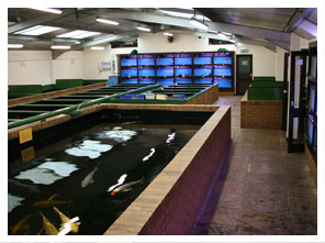 A5 Aquatics Superstore 4
